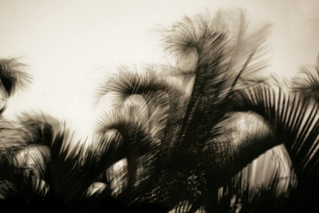 Palmscs.jpg